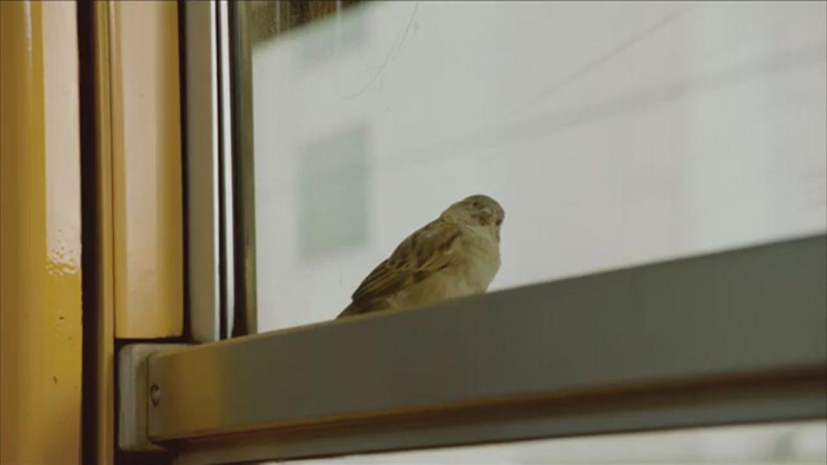bird_people-1200x675.jpg